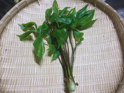 山菜2.jpg