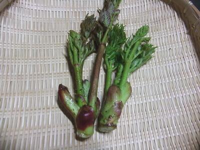 山菜3.jpg